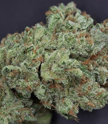 hybrid marijuana | hybrid marijuana strains | hybrid marijuana plants