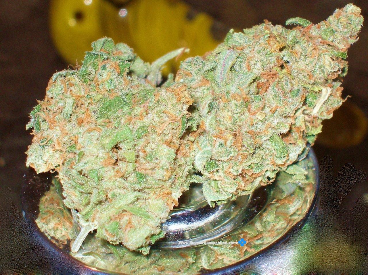Buy Northern Lights Online-marijuana for sale-buying marijuana