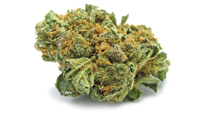 monster cookies strain | buy marijuana buds online | buy marijuana buds